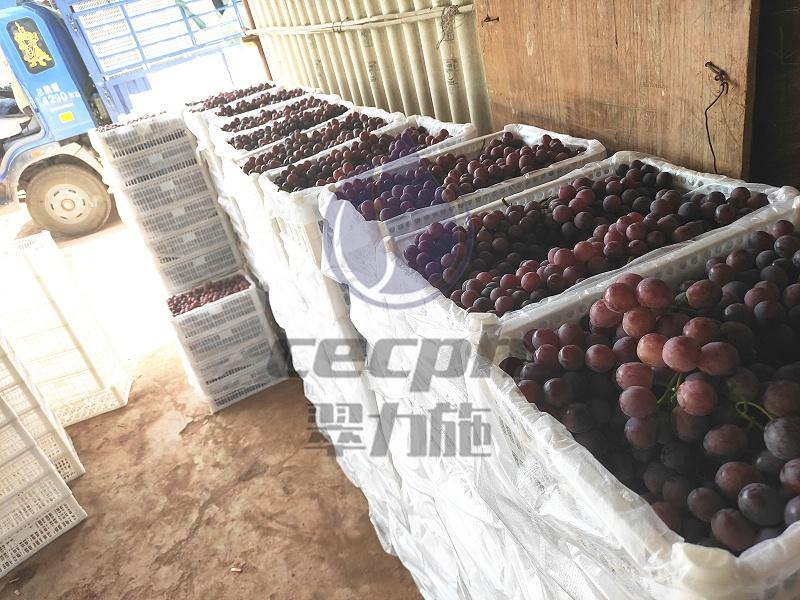 农业-以翠葡萄