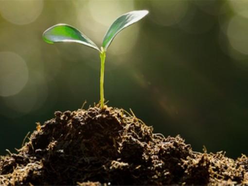 改善作物生长?翠力施水溶肥很给力!
