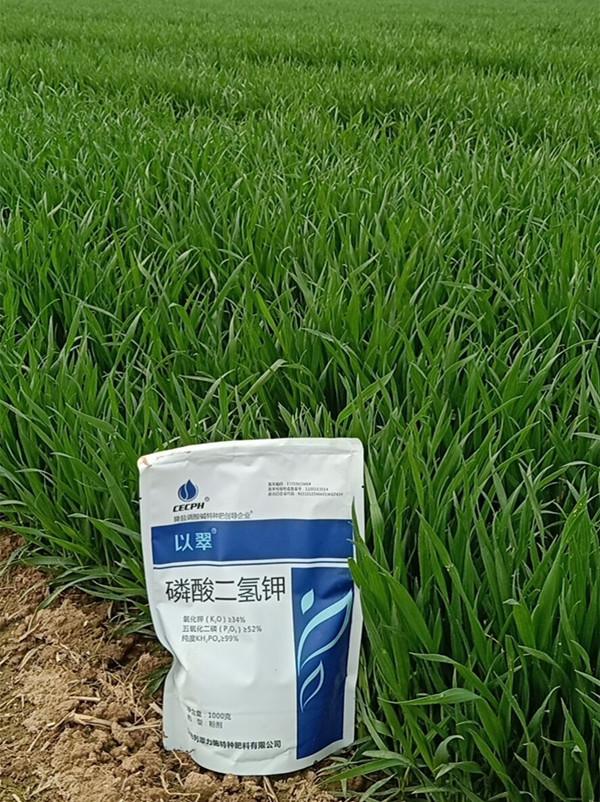 小麦施肥管理-以翠小麦